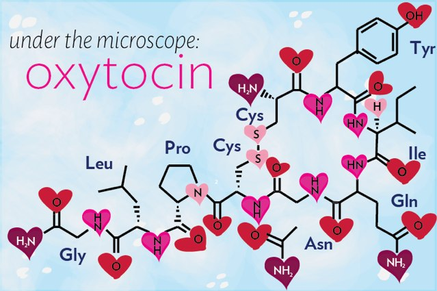 Oxytocin – The Dark Side Of The Love Molecule